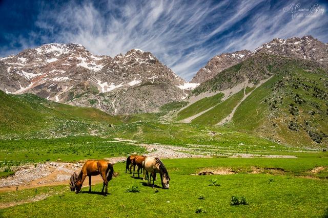 キルギス産馬