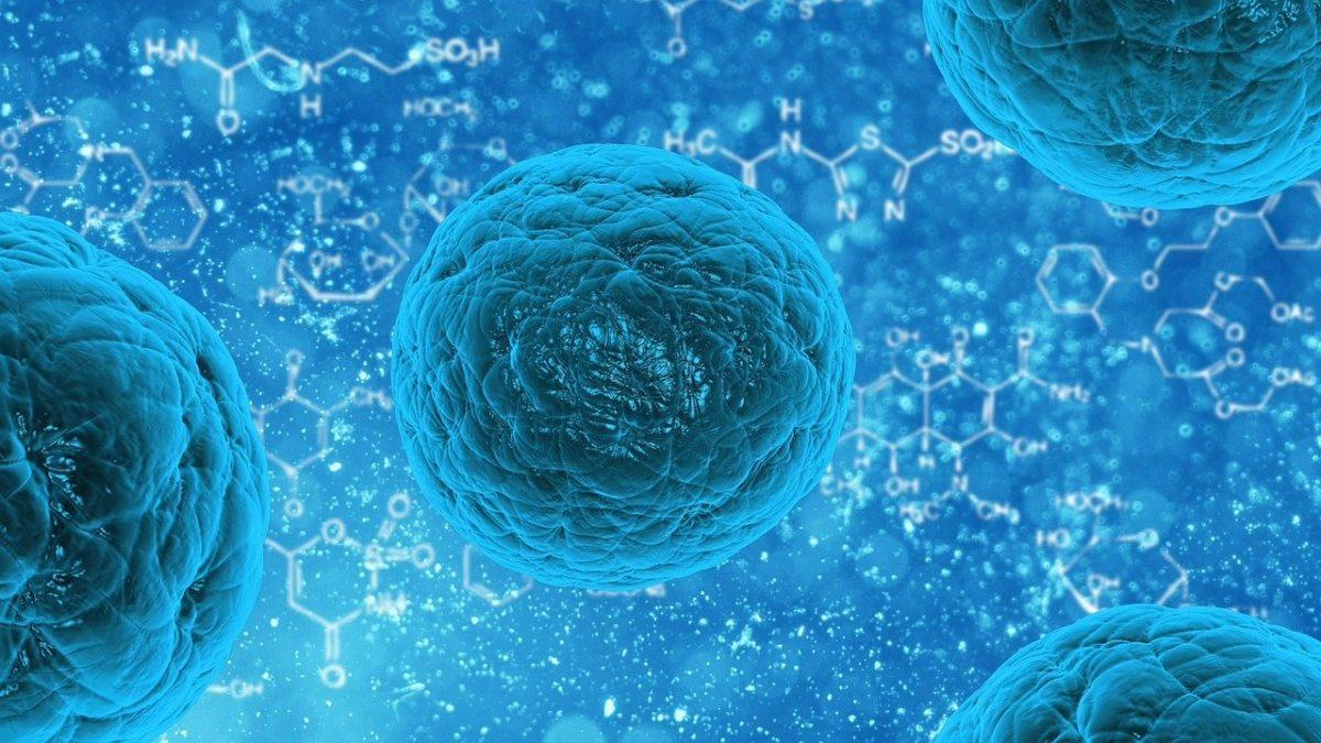ヒト幹細胞イメージ